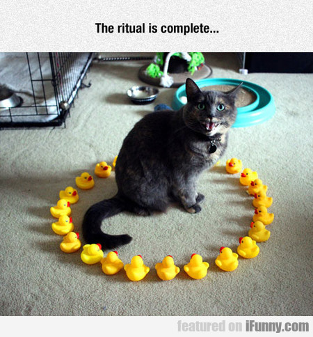 The ritual is complete...