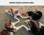 Huskies Trying To Summon Satan...