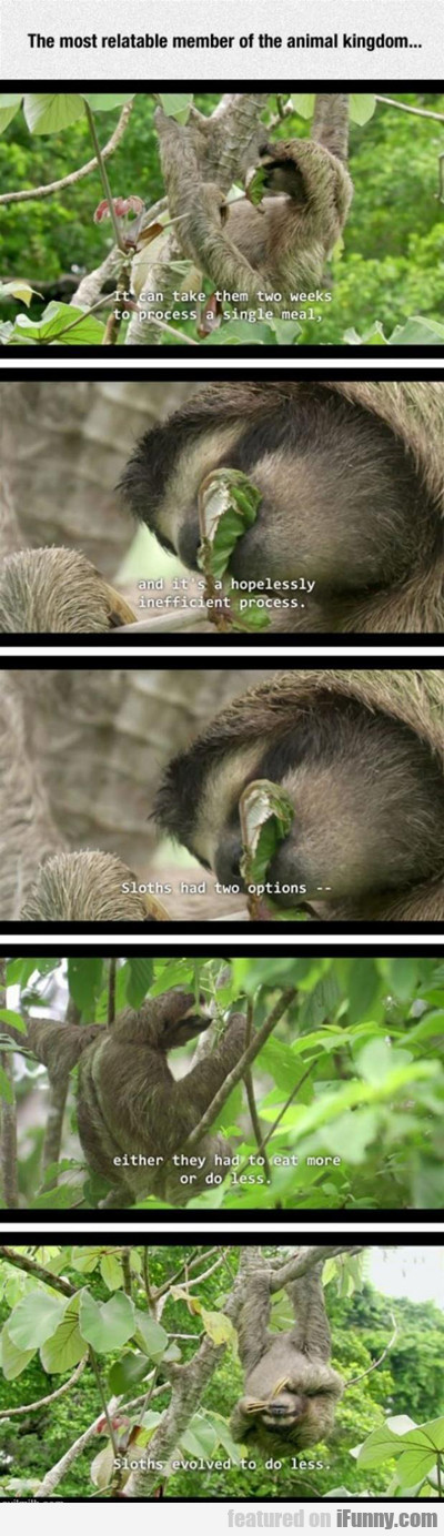 Sloths Are Relatable...