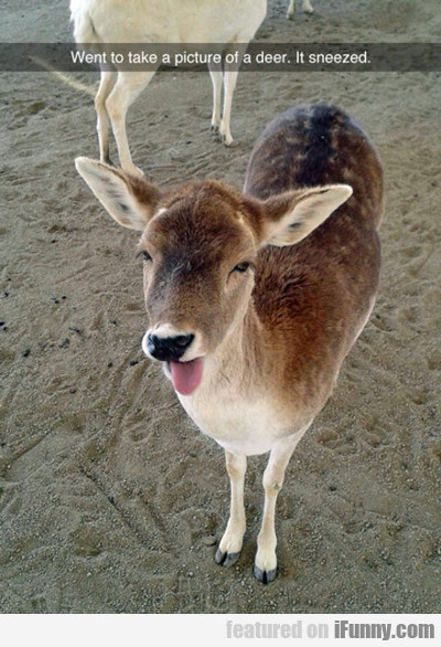 Deer Stuck Its Tongue Out...