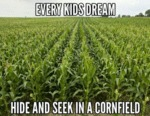 Every Kids Dream...
