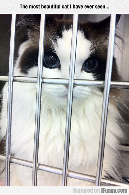 The Most Beautiful Cat I Have Ever Seen...