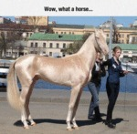 Wow, What A Horse...