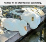 You Know It's Hot When The Swans Start Melting...