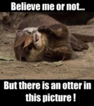 Believe It Or Not, There Is An Otter In This Pic.