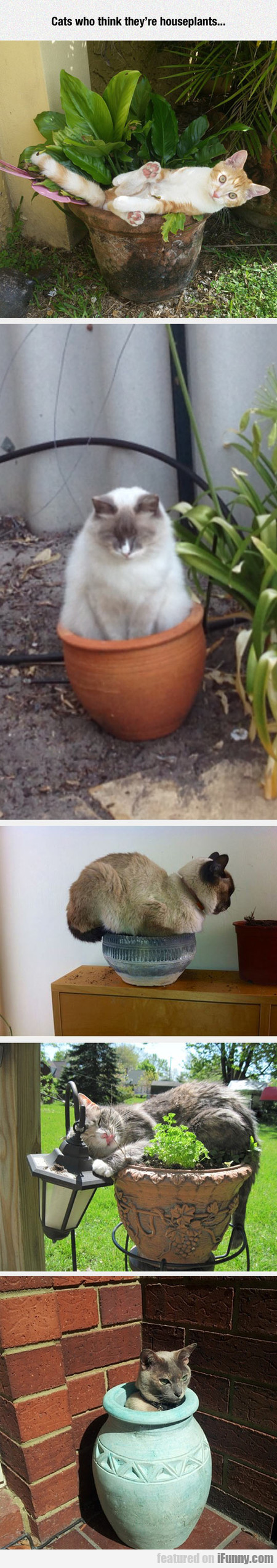 Cats who think they're houseplants...
