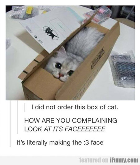 I Did Not Order This Box Of Cat
