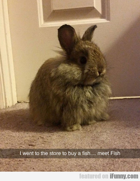 I went to the store to buy a fish...