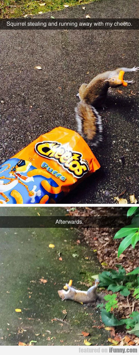 Squirrel Stealing And Running Away With My Cheeto
