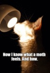Now I Know What A Moth Feels