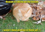 Human Is Raking Up The Leaves
