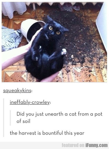 Did You Just Unearth A Cat From A Pot Of Soil