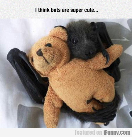 i think bats are super cute