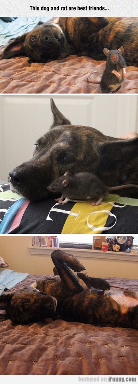 This Dog And Rat Are Best Friends...