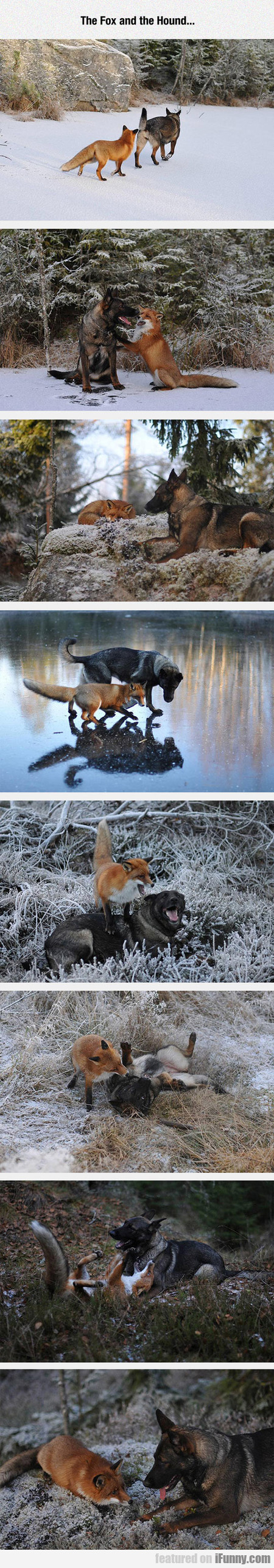 The Fox And The Hound...