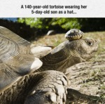 A 140-year-old Tortoise Wearing Her Son