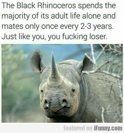 rhinos only have sex...