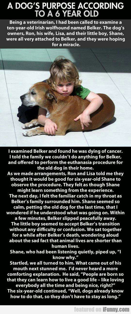 A Dog's Purpose According To 6 Year Old Kid