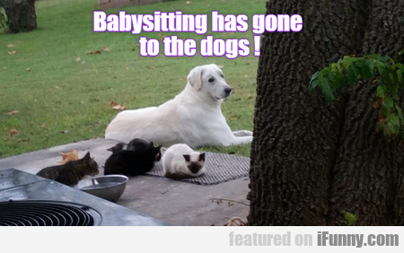 Babysitting Has Gone To The Dogs