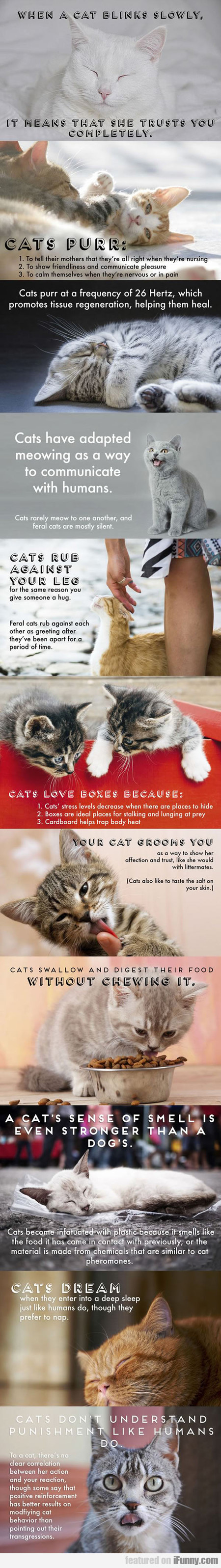 Some Facts About Cats