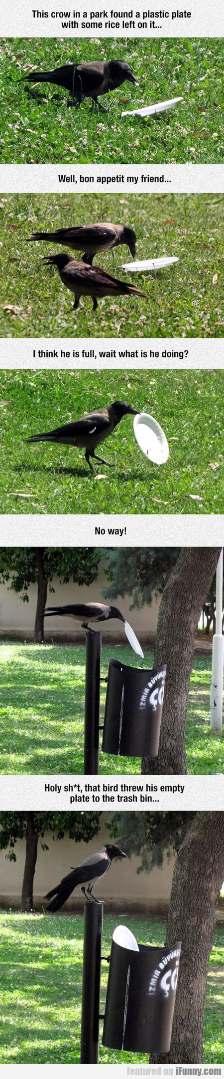 This Crow In A Park Found A Plastic Plate
