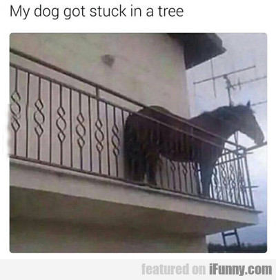 My Dog Got Stuck In A Tree...