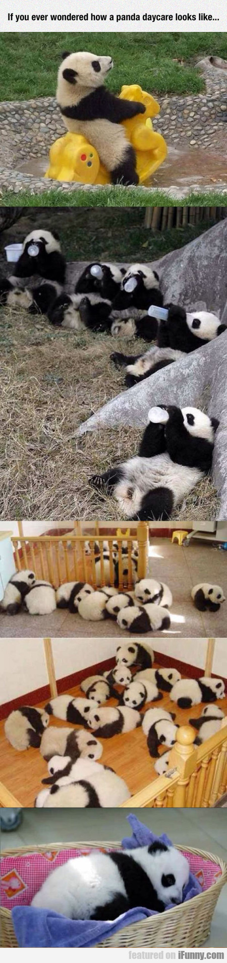 If You Ever Wondered How A Panda Daycare Looks...