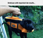 Briefcase With Important Lab Results...