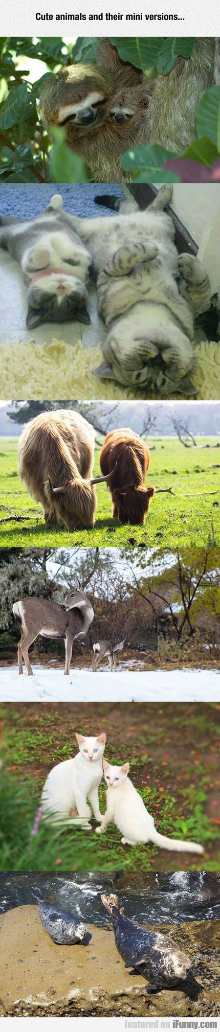 Cute animals and their mini versions...