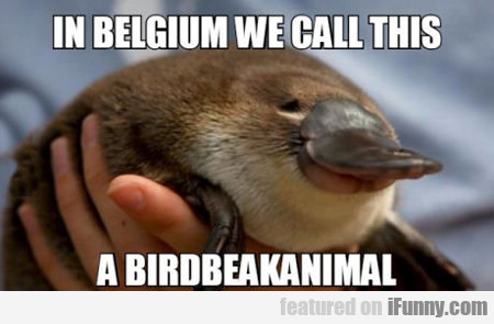In Belgium We Call This...
