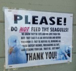Please Don't Feed The Seagulls