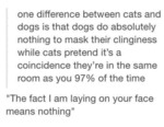 Main Difference Between Cats And Dogs