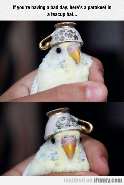 If You're Having A Bad Day Here's A Parakeet...