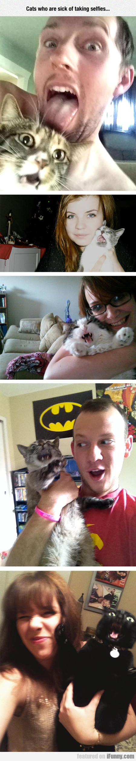 Cats Who Are Sick Of Taking Selfies...