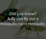 Did You Know That A Fly Can Fly...