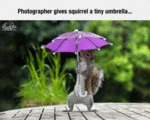 Photographer Gives Squirrel A Tiny Umbrella...