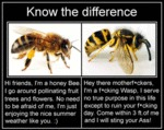 Know The Difference Between A Bee And A Wasp