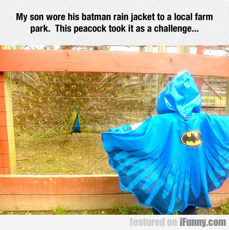 My Son Wore His Batman Rain Jacket To A Local Farm