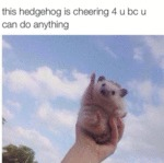 This Hedgehog Is Cheering 4 U