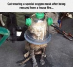 Cat Wearing A Special Oxygen Mask After Being...