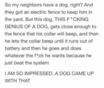 So My Neighbors Have A Dog, Right? And They Got...