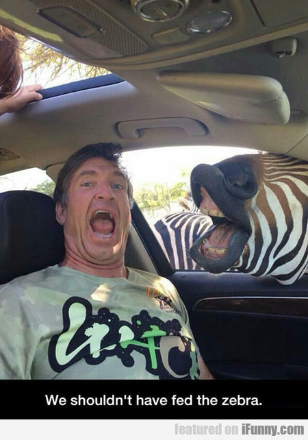 We Shouldn't Have Fed The Zebra