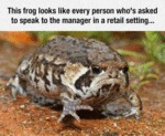 This Frog Looks Like Every Person Who's Asked To..