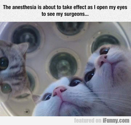 The Anesthesia Is About To Take Effect As I Open..