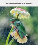 Two Frogs Using A Flower As An Umbrella...