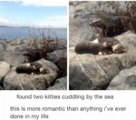 Found Two Kitties Cuddling By The Sea