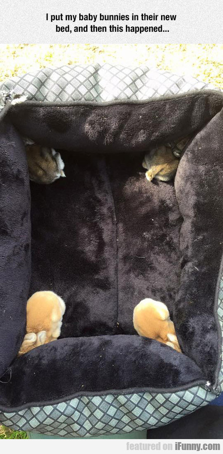 I Put My Baby Bunnies In Their New Bed