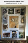My Wife Awards 'cat Of The Month' In Our House