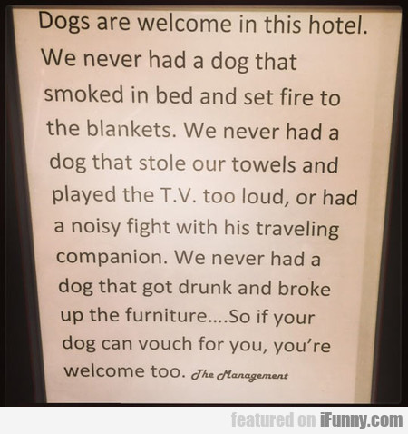 Dogs Are Welcome In This Hotel