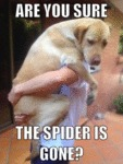 Are You Sure The Spider Is Gone?